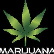 Marijuana in the Workplace: